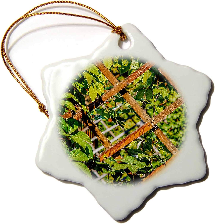 3dRose Wooden Trellis Grid and Green Garden Plants - Ornaments (ORN_264144_1)