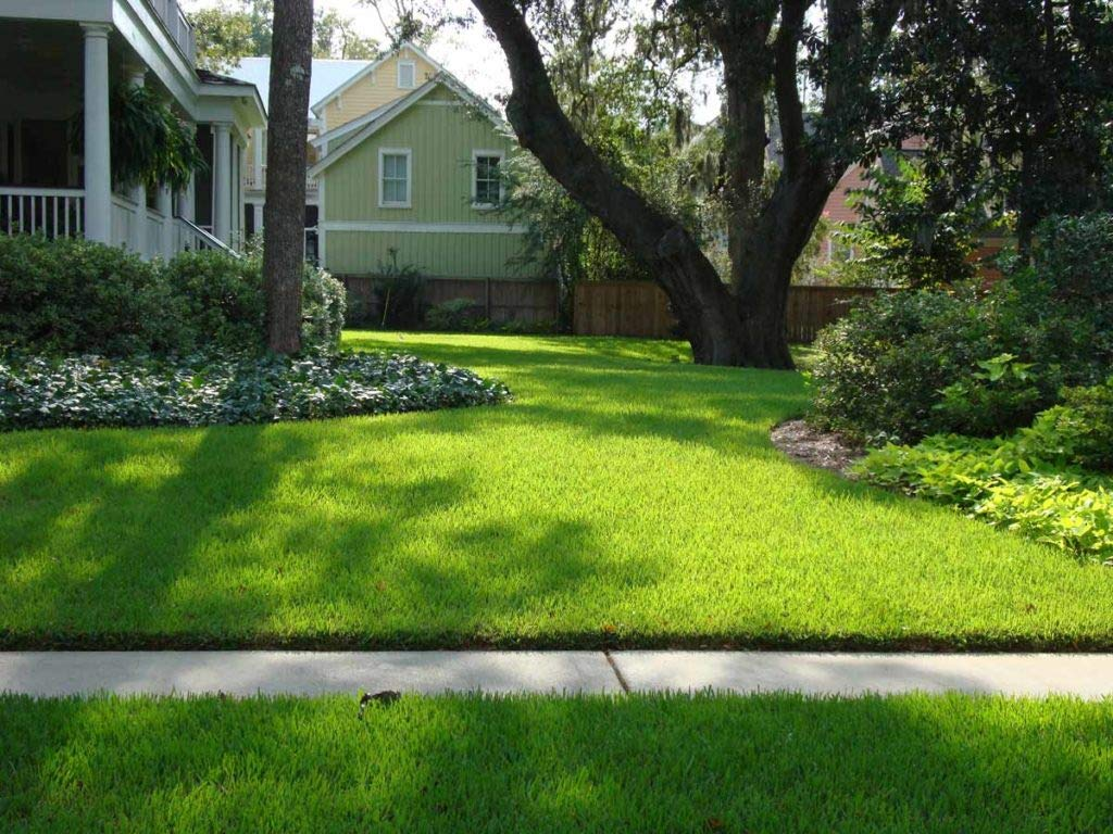 St. Augustine 'Palmetto' 3 Inch Sod Plugs - 18 Plugs - Drought, Salt, Shade, Cold, Heat & Frost Tolerant Turf Grass by Florida Foliage (Image #9)