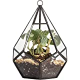 Modern Artistic Wall Hanging Tears Shape Diamond 3MM Thick Clear Glass Geometric Polyhedron Terrarium Hanging Air Planter(Plants not included) 4.5x4.5x5.3 inches (5.5 inches with loop)
