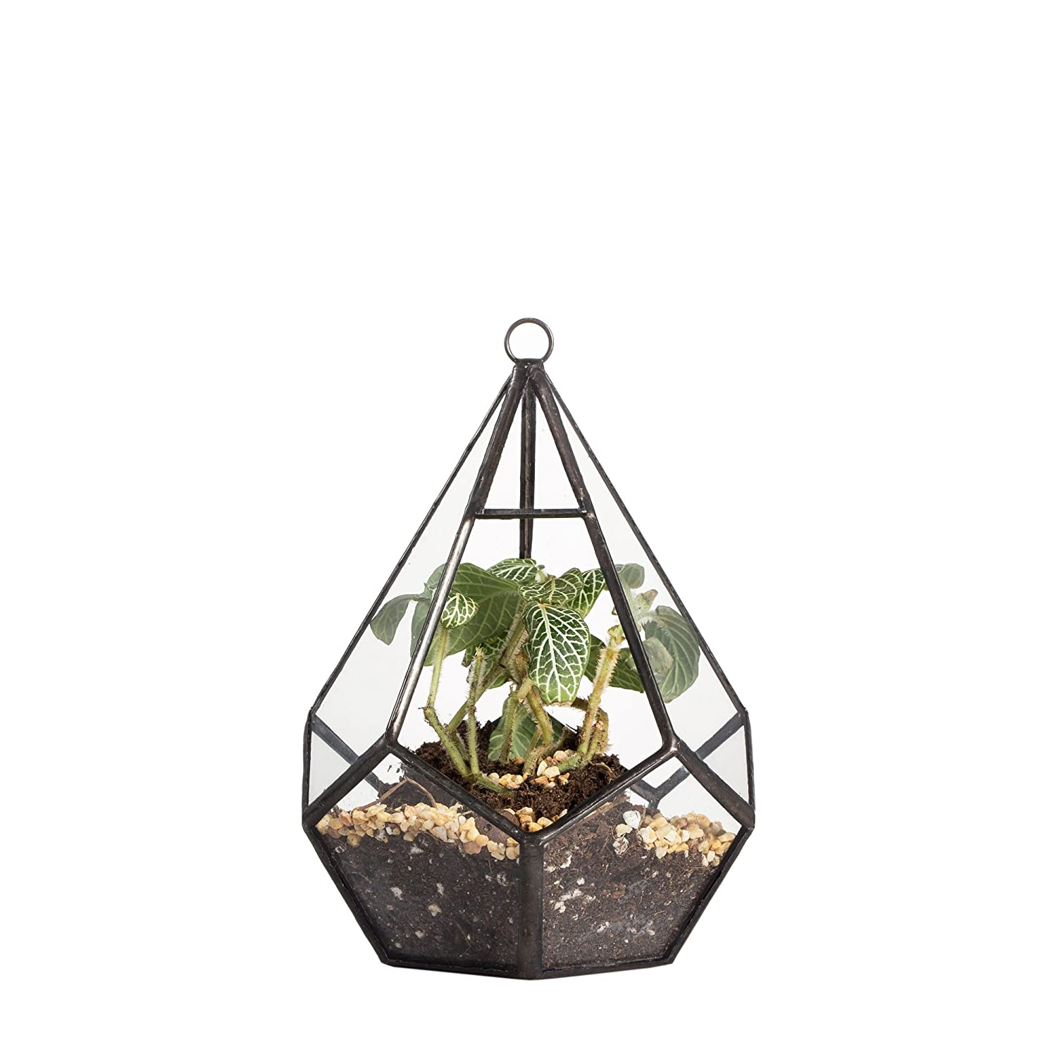 Modern Artistic Clear Hanging Air Planter Tear Diamond Glass Geometric Terrarium Small 11cm x 11cm x 13.5cm Clear Framed for Succulents Cacti Fern by NCYP Zhongpengcheng 20160220005_S