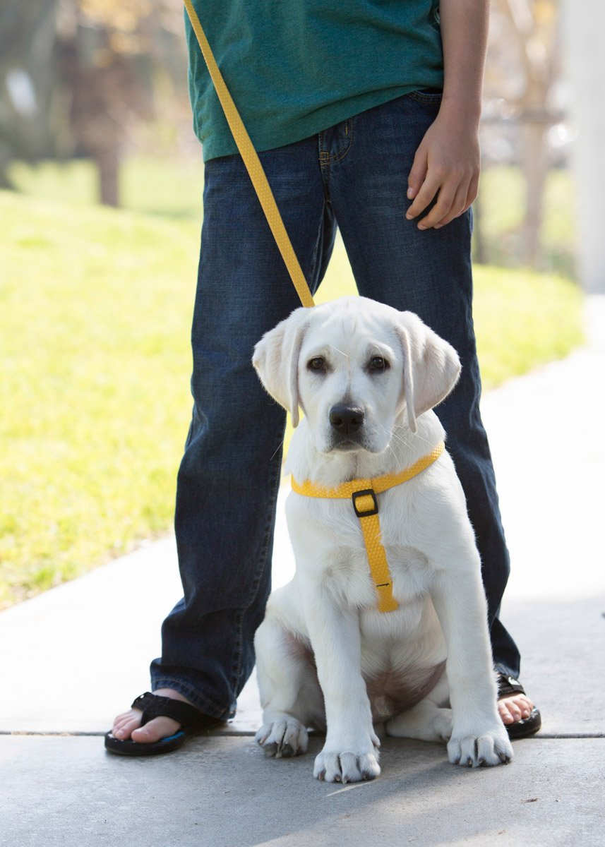 LupinePet Eco 3/4'' Sunshine 20-30'' Step In Harness for Medium Dogs by LupinePet (Image #2)