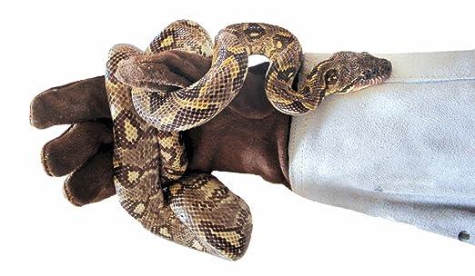 Dragon - Guante protector llinks - de ante.: Amazon.es: Productos para mascotas