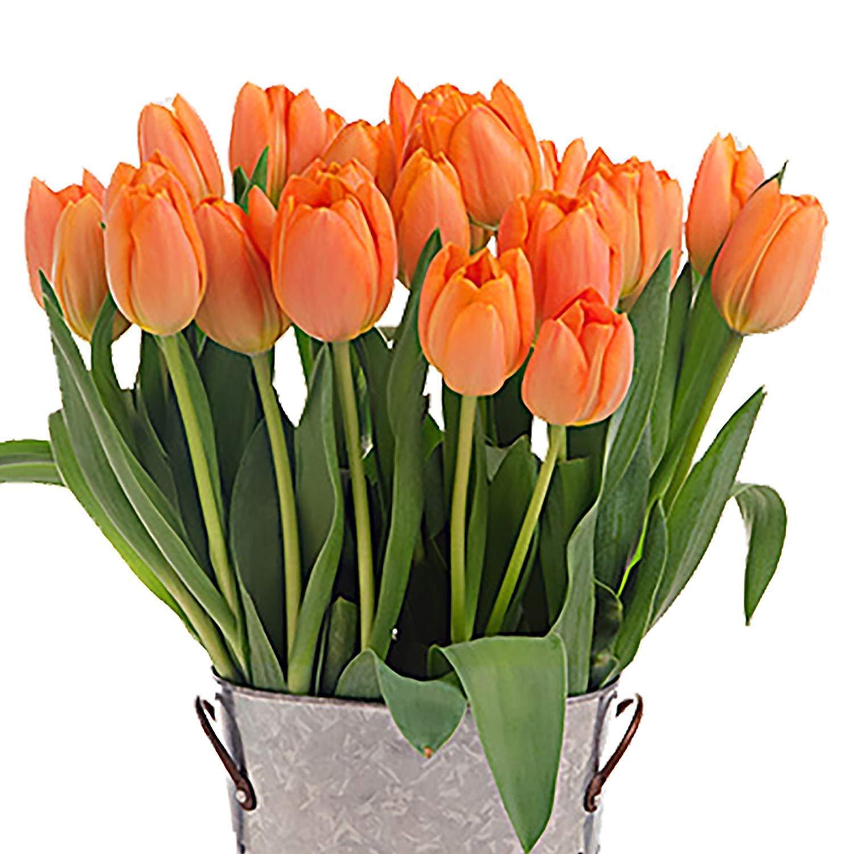 Stargazer Barn -2 Dozen Orange Tulips with French Bucket Style Vase - Farm Fresh by Stargazer Barn