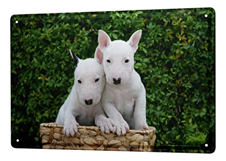Amazoncom Tin Sign Xxl Breed Pit Bull Terrier Puppy Albino Home