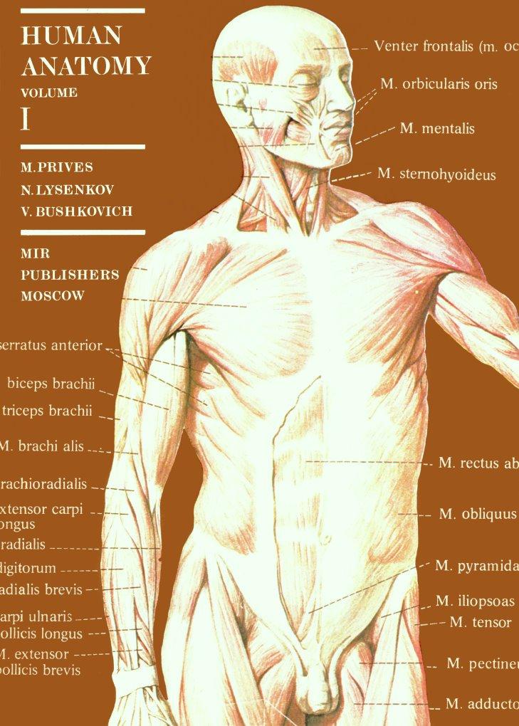 Ziemlich Definition Des Kondylus In Der Anatomie Zeitgenössisch ...