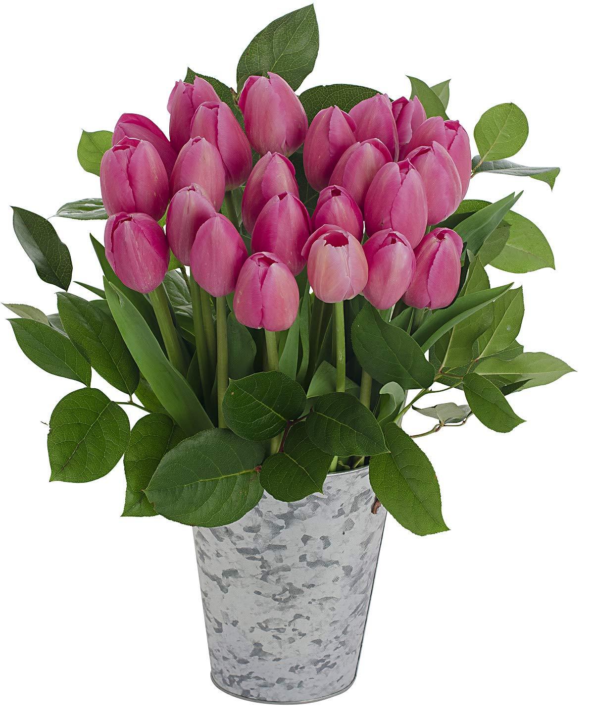 Stargazer Barn Flamenco Bouquet 2 Dozen Bright Pink Tulips with French Bucket Style Vase