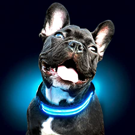 Amazon.com : Shine for Dogs Ultimate LED Dog Collar – USB Rechargeable,  Cable Included, 5 Awesome Colors. Ultra Bright, Durable, Made to Last. Make  Your Dog More Visible at Night. (Small Blue) :