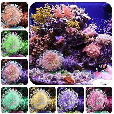 HOTUEEN 100pcs/ Bag Mixed Fluorescent Water Grass Seeds Aquarium Decor Herb Plants Aquatic Plants : Garden & Outdoor