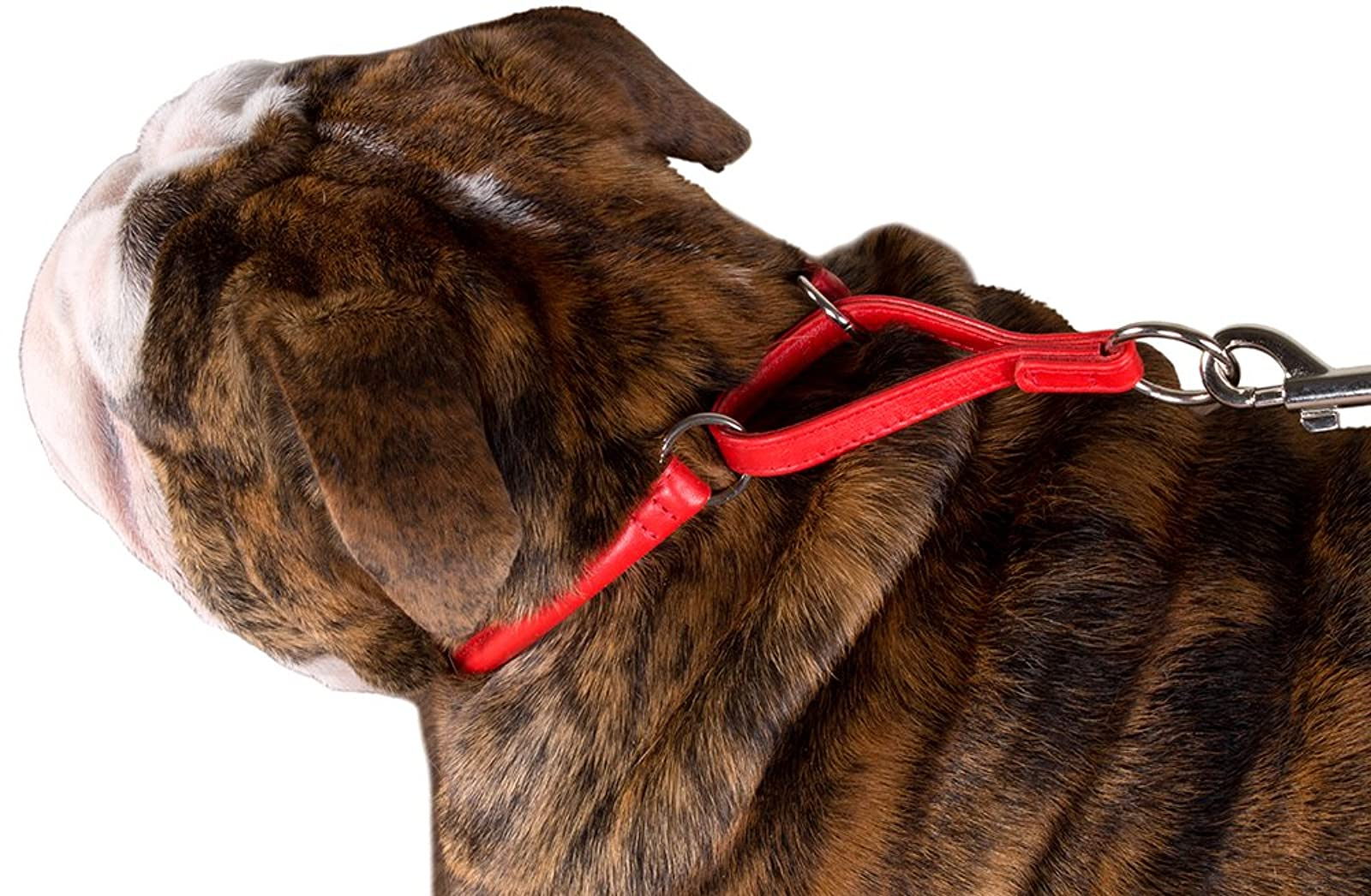 CollarDirect Rolled Martingale Dog Collar Training Genuine - 9