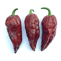 Chilli BHUT JOLOKIA Ghost Chocolate Brown Chili 10 Seeds Chile Pepper HOT SHU 1M