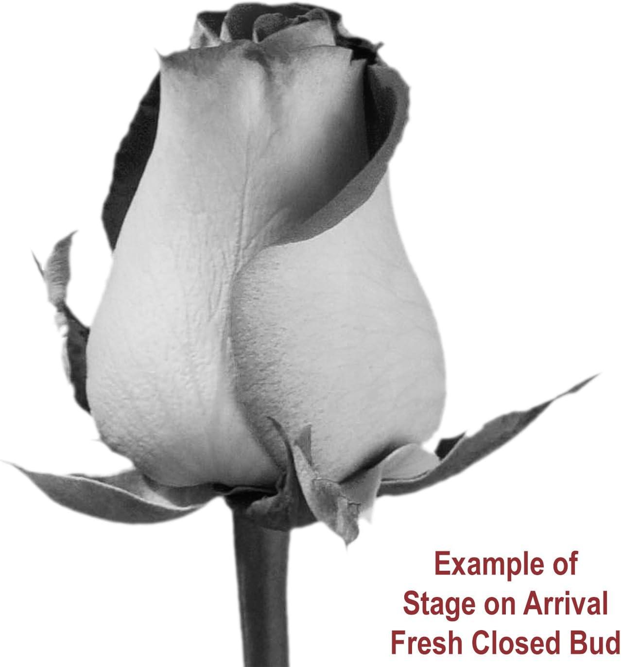 B00B2PN1E4 GlobalRose 50 Red Roses - Fresh Flowers- Delivery By Thursday April 23 81oU3AvHlDL