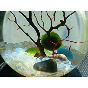Marimo Ball In A Bulb Aqua Terrarium Table Decorative Mini Aquarium