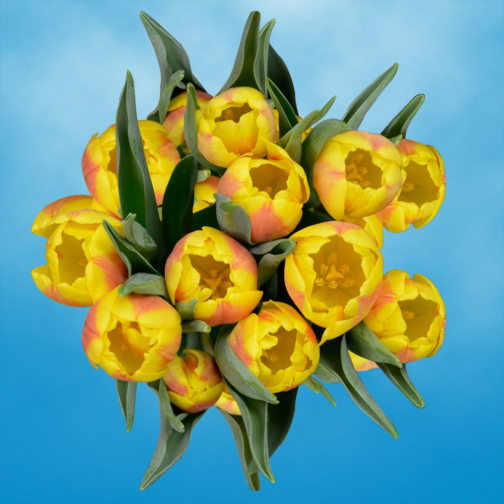 GlobalRose 30 Stems of Yellow Tulips Flowers - Fresh Flowers for Delivery by GlobalRose (Image #4)