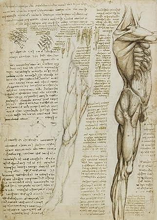 Vintage Anatomie LEONARDO da VINCI Die Muskeln des Beins, Italien ...