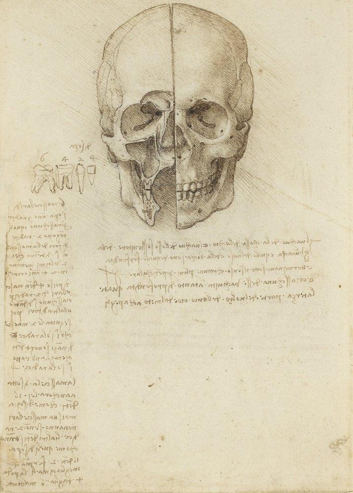 Vintage Anatomie LEONARDO da VINCI Studie des menschlichen Schädels ...