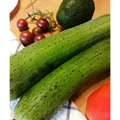 Hundredfold Luffa Gourd 25 Seeds - Luffa Vegetable, Loofah, Smooth Sponge Melon, Luffa aegyptiaca : Garden & Outdoor