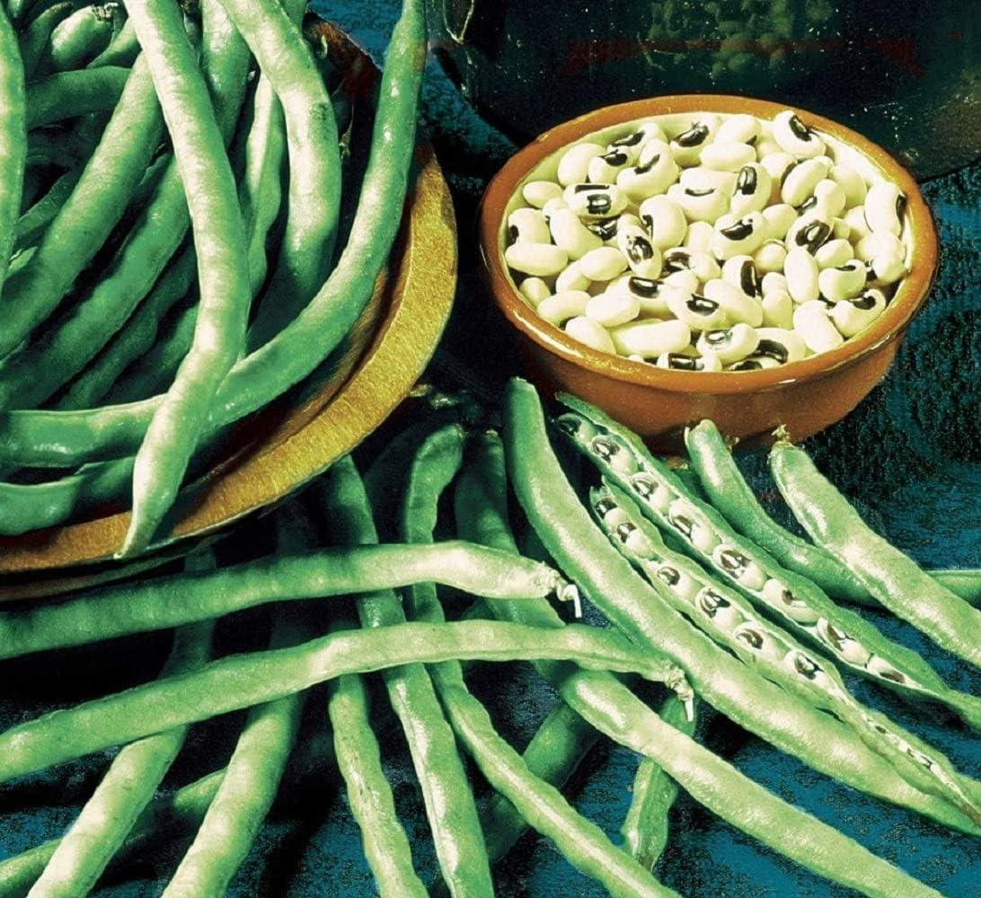 David's Garden Seeds Southern Pea (Cowpea) California Blackeye #5 9787 (Green) 100 Non-GMO, Heirloom Seeds
