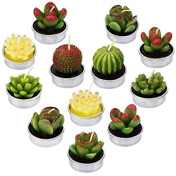 La Bellefee Bougies Cactus Succulentes Bougies Chauffe Plat Sans Fumee Pour Art Mariage Spa Cadeaux Decoration De La Maison Lot De 12