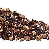 Deloky 150 PCS Christmas Natural Mini Pine Cones- 3CM Thanksgiving Pinecones Ornaments Vase Fillers for DIY Crafts, Home Deco