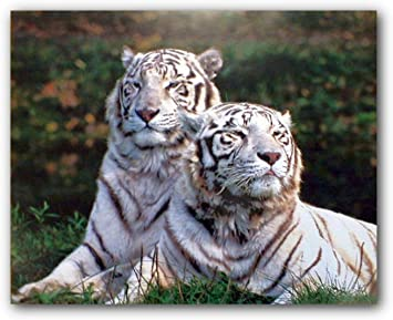 BENGAL TIGER IN JUNGLE 3352 Poster Print Art A0 A1 A2 A3 A4 Animal Poster