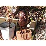 Apples to Pears Hand Crafted Metal Owl Watering Can