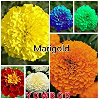 Earth Hopper Mix Colour 6 Variety Marigold Flower -50 Seeds Pack