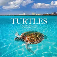 Turtles Calendar 2020: 16 Month Calendar