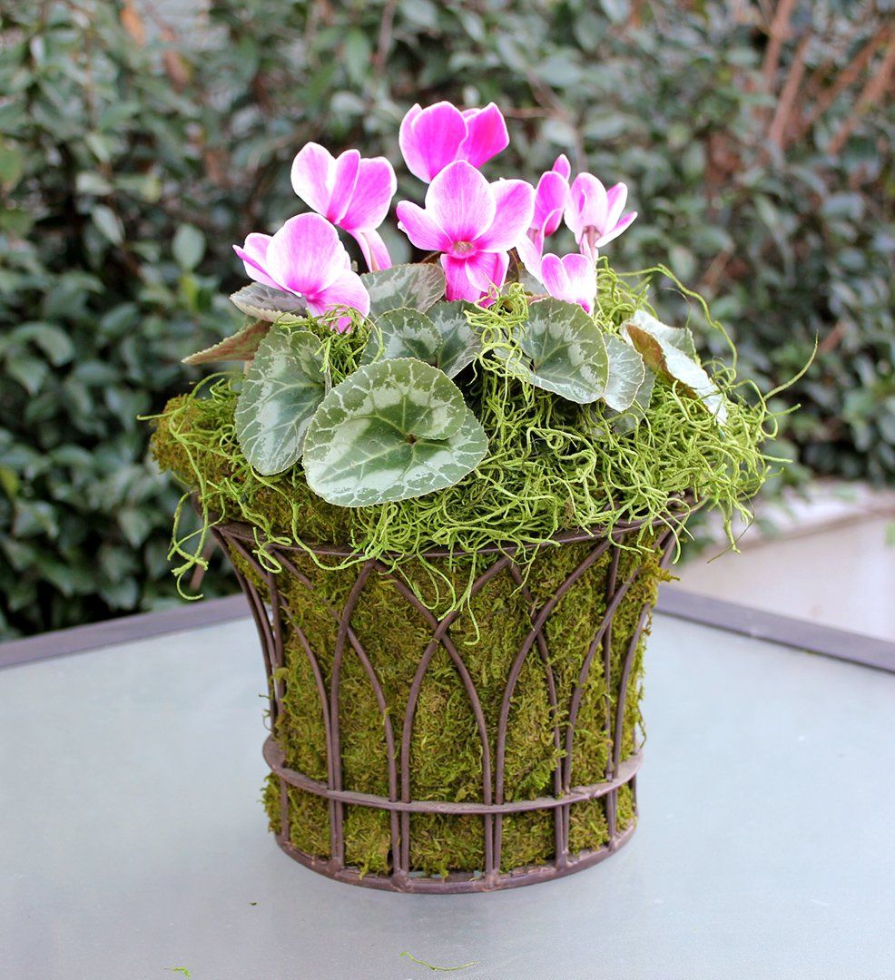 8oz 200 cubic inch 26912 Grass SuperMoss Spanish Moss Preserved