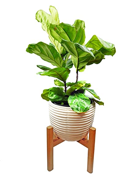 Amazon.com : Extra Large Plant Stand/Mid Century Modern Planter ...