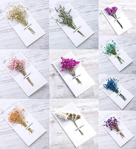 Amazon.com: Tarjeta de felicitación de flores secas, tarjeta ...