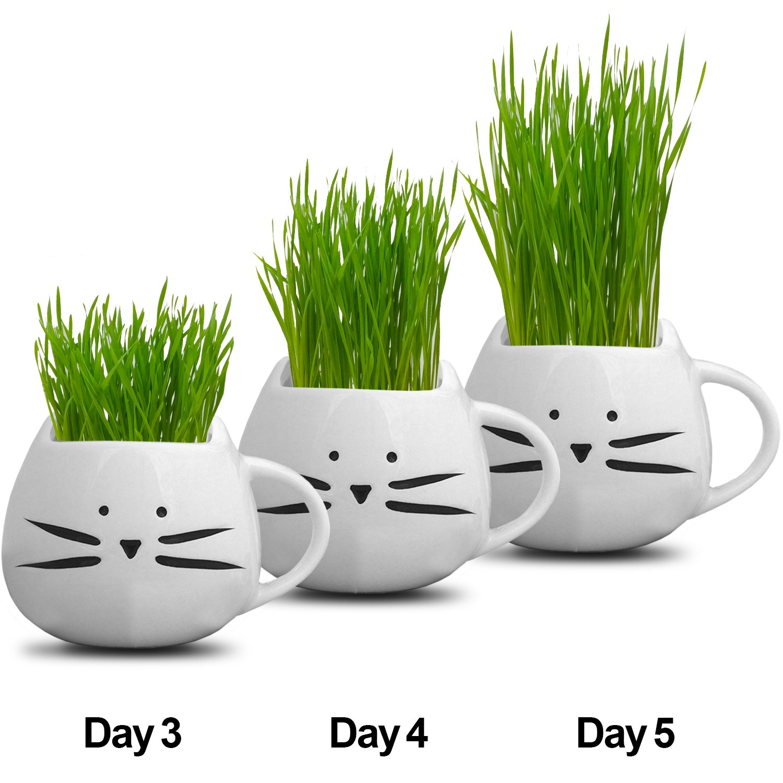 Amazon.com: Organic cat grass growing kit with organic seed mix ...