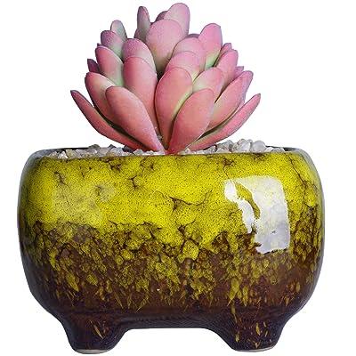 Succulent Pots   Ceramic Bonsai Pot with Drainage Rectangular Flower Plant Cactus Planter, 4.8x3.4x3 inch, Yellow : Garden & Outdoor