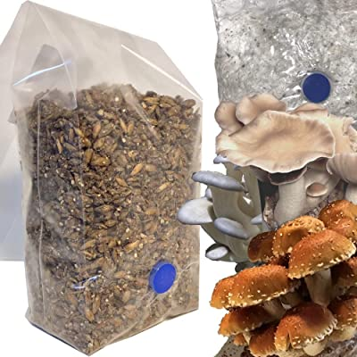 One-Step Mushroom Growing Kit | 1.5 lb Direct from Injection Mushroom Substrate Bag : Garden & Outdoor