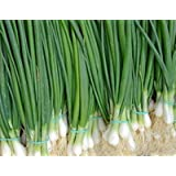 Seeds Welsh Onion Pyero - Pierrot Organically Grown Russian Heirloom Vegetable