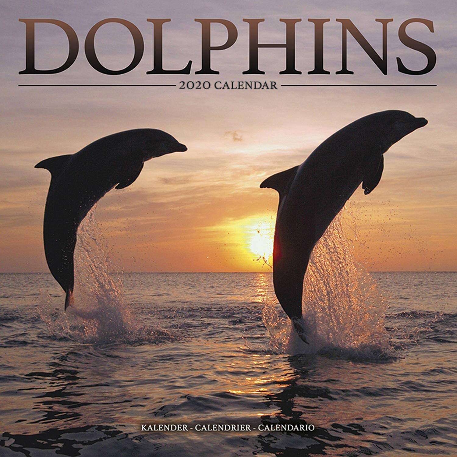 Calendario Fin 2020.Amazon In Buy Dolphin Calendar Ocean Calendar Calendars