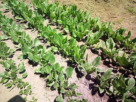 野菜栽培で使用