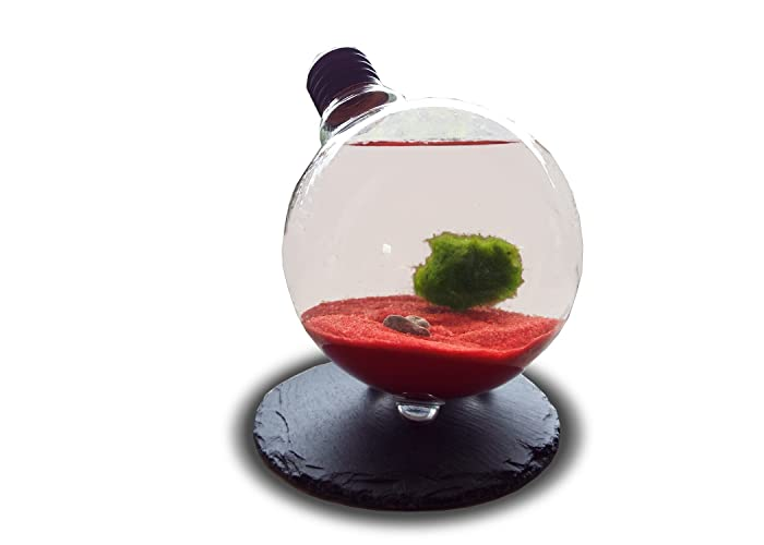 Luffy Marimo Moss Ball In Light Bulb Terrarium Decor With Red Sand