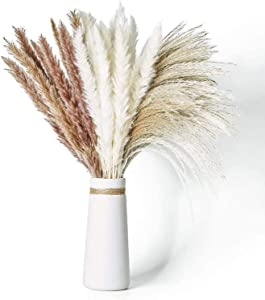 Dried Pampas Grass, 60 Pcs Natural Pampas Grass with 3 Colors Fluffy Swinging DIY Boho Plant 17