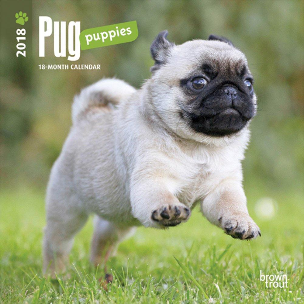 amazon com pug puppies 2018 7 x 7 inch monthly mini wall calendar