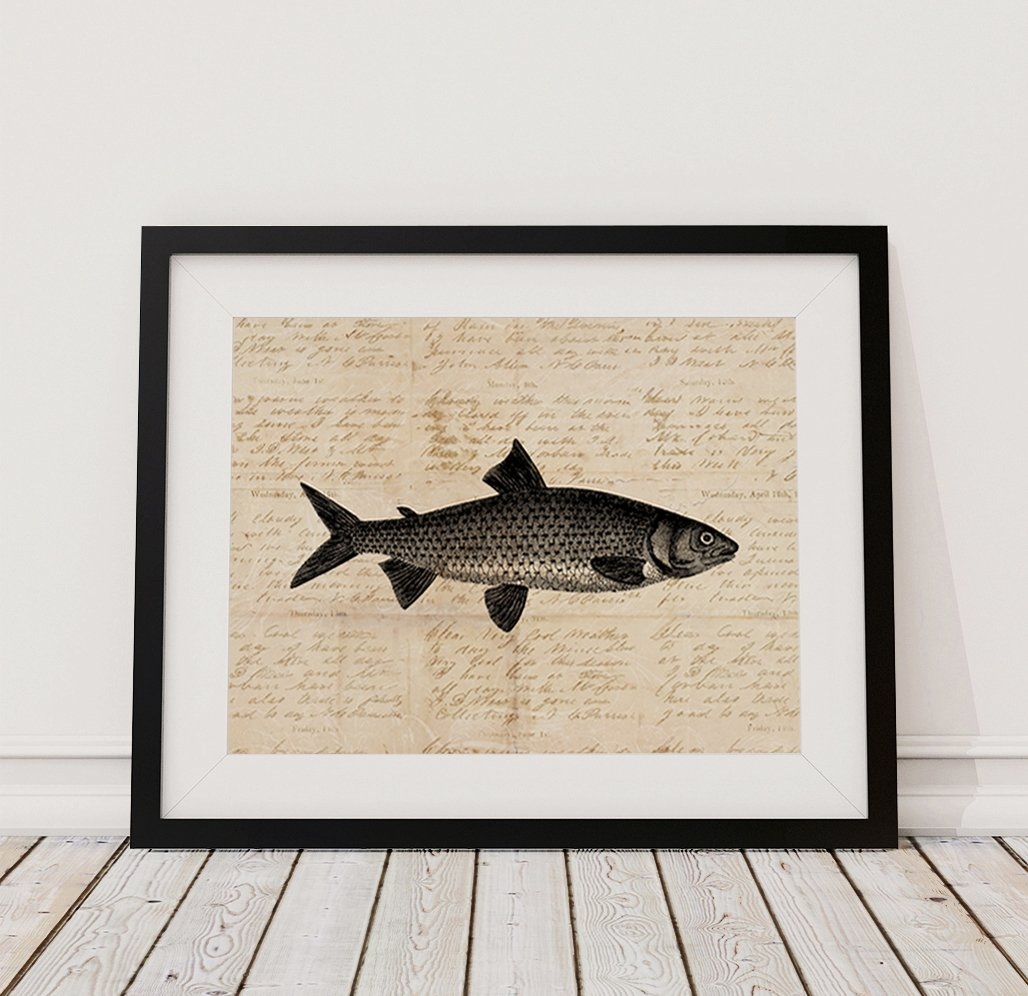 Vintage Fish Wall Art Print Fishing Outdoors Nature Themed Home Decoration Antique Or Poster With A Aged Script Paper Style