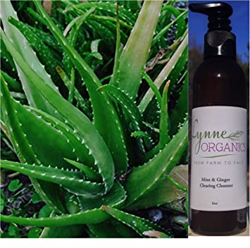 Ginger organic facial cleanser with