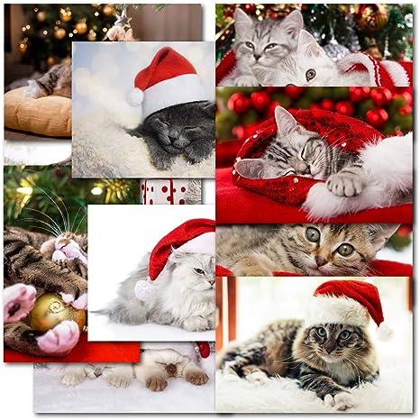 Pack de 30 mixtos gato los amantes de los gatos Premium – Caja de tarjetas de