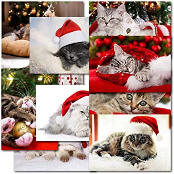 Boxed Cat Christmas Cards.Doodlecards Pack Of 20 Mixed Box Cat Lovers Premium Christmas Cards