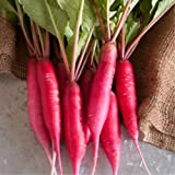 Radish Sprouting Seed - Red Arrow Variety - 1 Lb