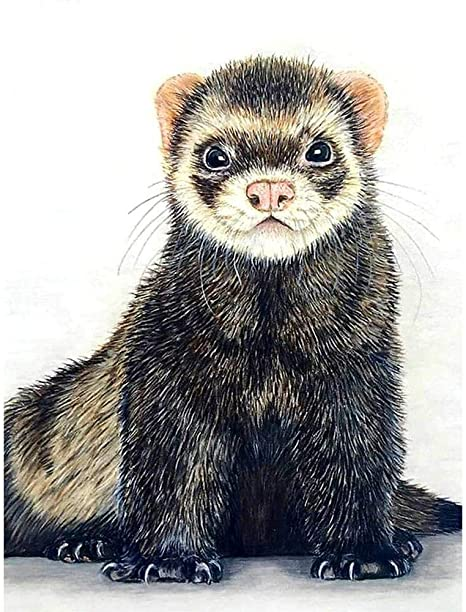 Diamond Painting 30X40Cm Full Drill Round Diamond Cat Animal Diamond Embroidery Picture Cross Stitch Home Decoration 5D Painting Kits Frameless,Zhencg