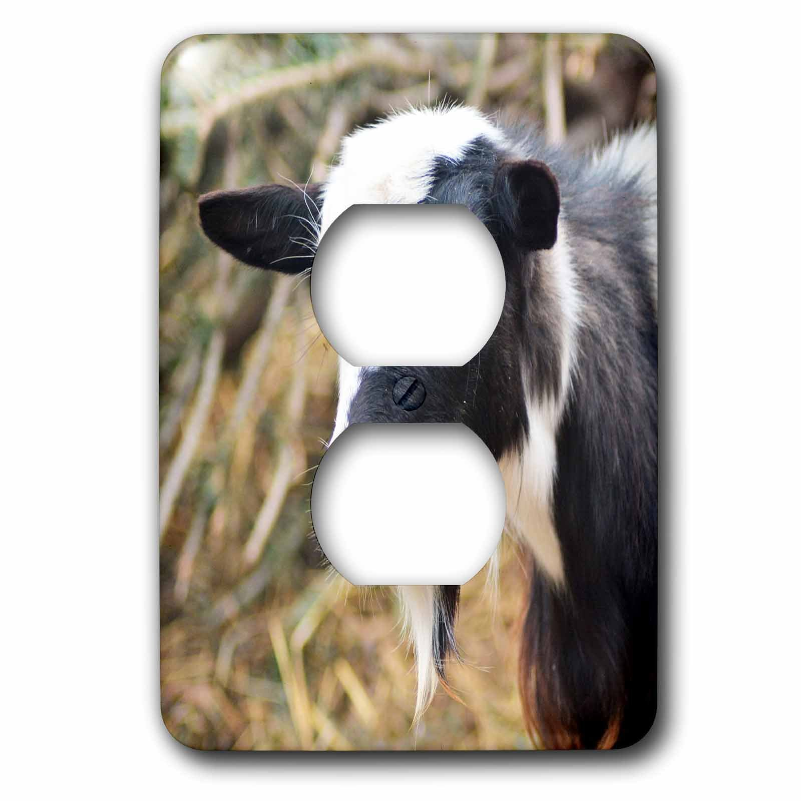 3dRose WhiteOaks Photography and Artwork - Goats - Ying Yang Goat is a photo of a goat that reminded me of ying yang - Light Switch Covers - 2 plug outlet cover (lsp_265343_6)