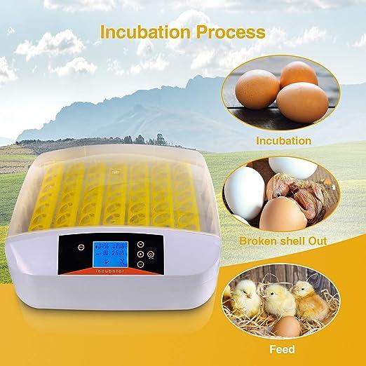 Brutmaschine Vollautomatisch 24 H/ühner Eier Brutger/ät Intelligent Brutautomat Motorbr/üter mit LED Temperatur /& Feuchtigkeitsregulierung