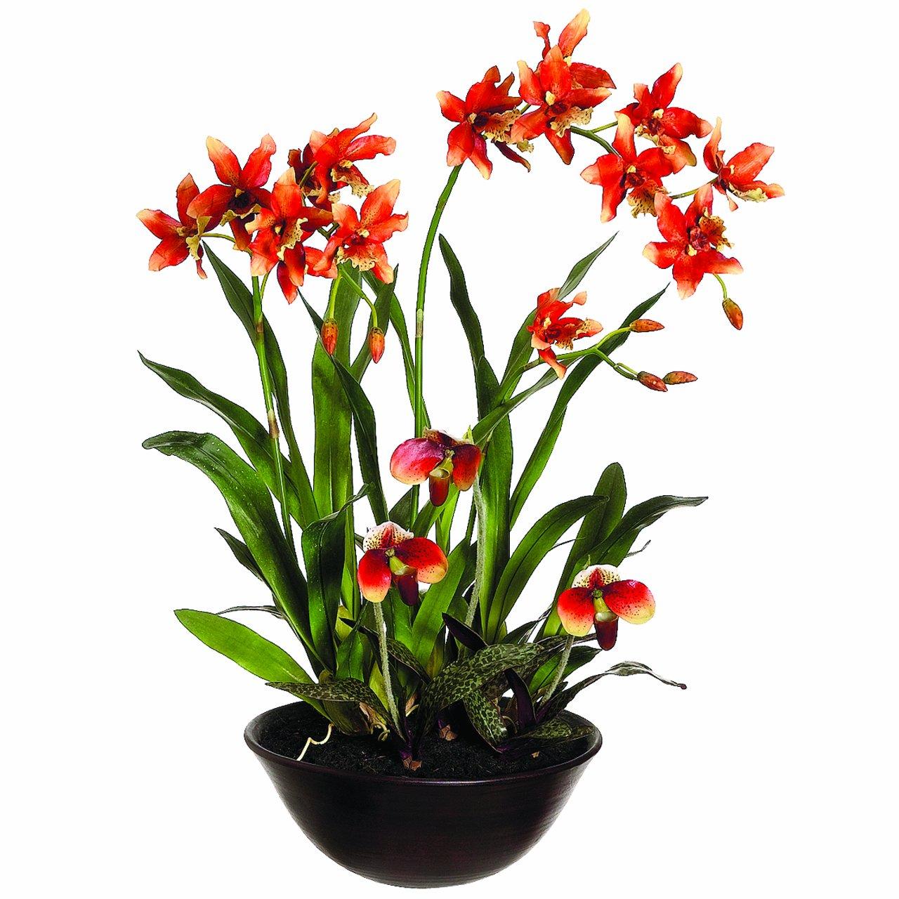 Amazon Silk Dcor Oncidiumladys Slipper Orchid Floral