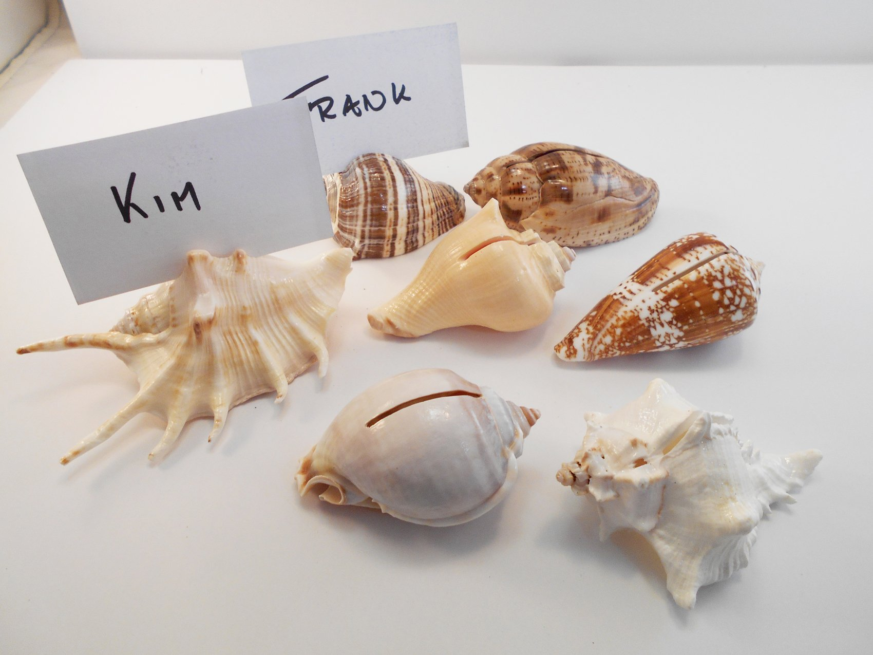 Set of 24 Genuine Seashell Place Card Holders Beach Wedding Favor Nautical Party Decor Sea Shell Table Sets