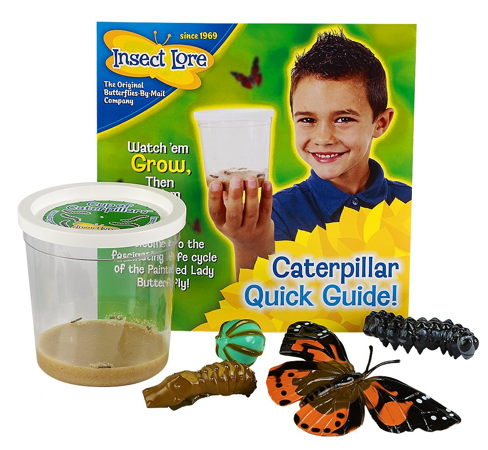 Insect Lore 5 Live Caterpillars - Cup of Caterpillars Butterfly Kit Refill - Plus Butterfly Life Cycle Stages Toy Figurines - Shipped Now